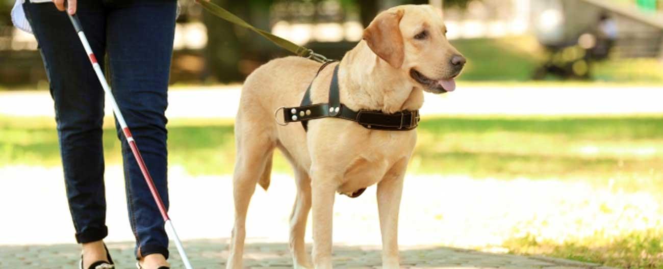 Deficientes visuais podem viajar com o seu cão-guia sem pagar a mais pela passagem de ônibus