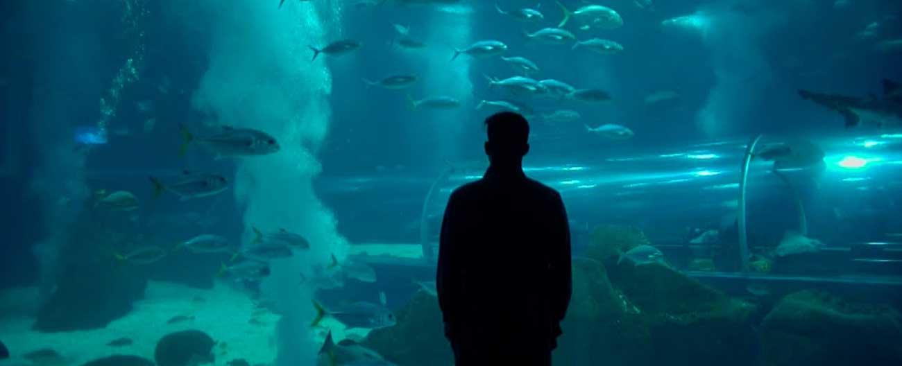 AquaRio: o maior aquário marinho da América do Sul.